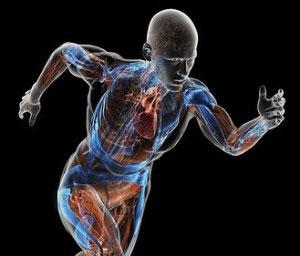 کربوهیدرات ها و ورزش و فعالیت بدنی