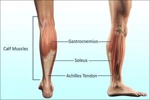 عضلات ساق یا Calf