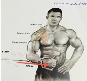 چرخش داخلی عضلات شانه