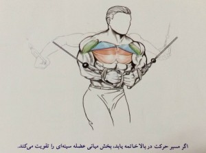 اگر مسیر حرکت در بالا خاتمه یابد،بخش میانی عضله سینه ای را تقویت می کند