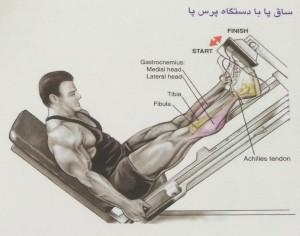 ساق پا با دستگاه پرس پا