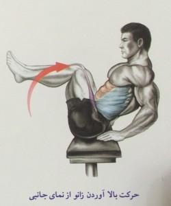 حرکت بالا آوردن زانو از نمای جانبی